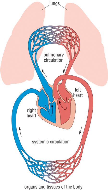 respiratory system critical thinking questions