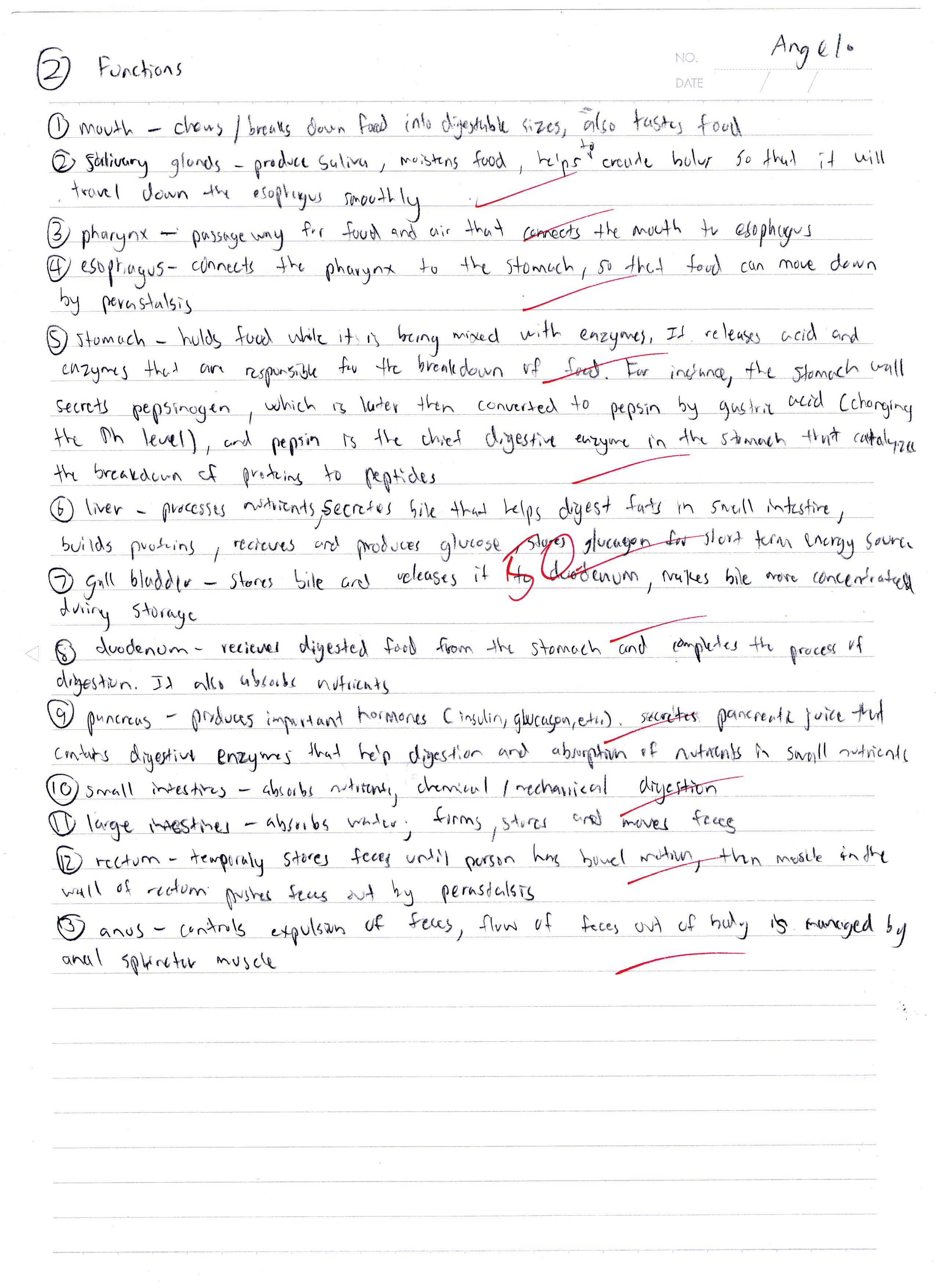 digestive system essay questions